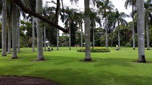 City Botanic Gardens Grassed Areas In The Brisbane Botanical Gardens Picture Of