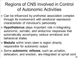 Role Of Brain Stem Ccf L11 Autonomic Nervous System Physiology Unit 1 Flashcards