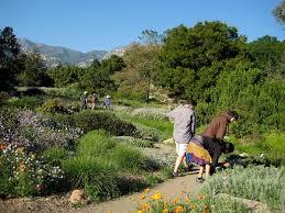 Botanic Garden Santa Barbara Stop To Investigate To Flowers On The Meadow Path Santa Barbara