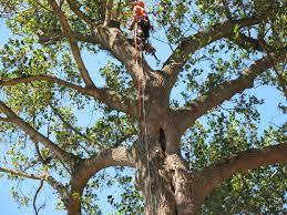 pagodin s tree removal service providing the best tree care