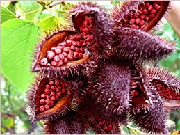beware annatto the natural food color masquerading as the safe