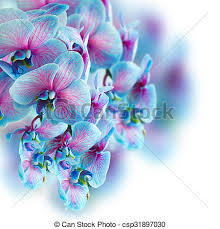 Blue Orchid Flower Stock Photos Of Blue Orchid Branch Blue Orchid Flowers Branch On