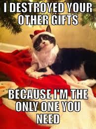 Merry Christmas Funny Meme - christmas merry cat and animal