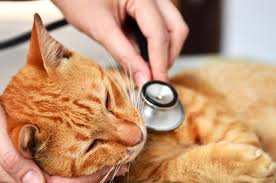 Taking Care Of A Blind Cat End Stage Feline Kidney Disease Lovetoknow
