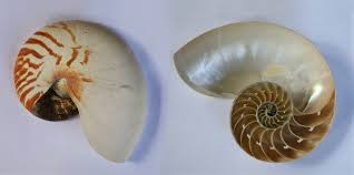 what is the differnece between a spiral and regular perm what is the difference between helix and spiral quora