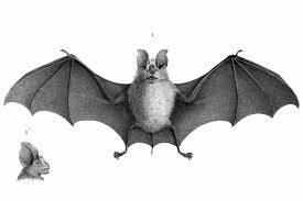 bat animal transparent png images free download 021 free