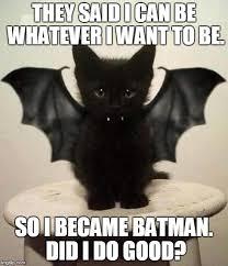 Bat Meme - cute imgflip