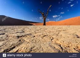Floor Dry by Large Cracked Dry Mud Soil Of Oasis Presents Pattern On Desert