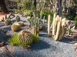 Wagga Wagga Botanical Gardens Succulent Garden Picture Of Wagga Wagga Botanic Gardens Wagga