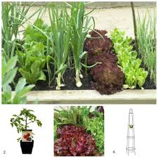 collection diy small vegetable garden photos best image libraries