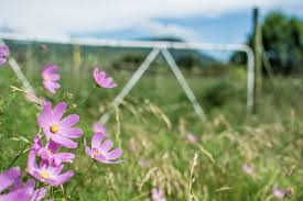 South African Wild Flowers - 7 of the best places to see flowers in south africa getaway magazine