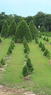 santa u0027s farm map santa u0027s christmas tree forest