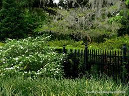 spotlight on florida harry p leu gardens a mother u0027s day