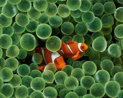 93 best sea creatures images on pinterest nature under the sea