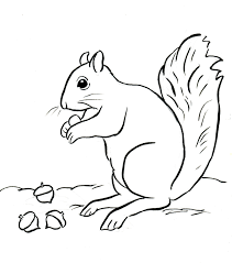 squirrel coloring page in squirrel coloring pages on with hd