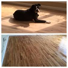 Laminate Flooring And Pets Dad Posts Photos Of Customer Dogs As U0027employee Of The Week U0027 And
