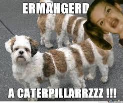 Potato Girl Meme - how potato girl see dog by faris meme center