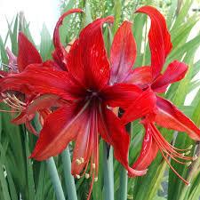 native nz plants gardenpostnz bulbs and plants fom nz u0027s premier mail order