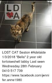 Lost Cat Meme - lost cat seaton adelaide 132018 bella 2 year old tortoiseshell