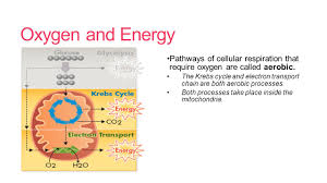 cellular respiration unit 4 what is cellular respiration