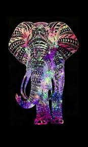 cool elephant wallpaper best baby elephants ideas only on pinterest baby elephant anything