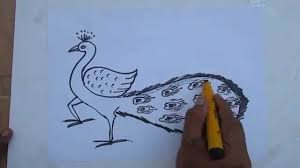 how to draw a simple peacock by praveen d l youtube