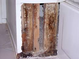 Remove Mold From Walls In Bathroom How To Remove Mold From Bathroom Walls Orange Mold