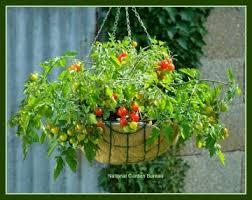 bold and modern container garden vegetables innovative decoration