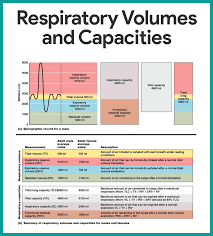Anatomy And Physiology Apps Respiratory System Anatomy And Physiology Respiratory System