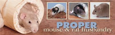 Best Bedding For Rats Caring For Your Pet Mouse Or Rat