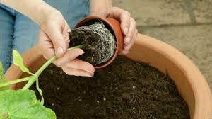 how to sow seed in small pots gardening tips youtube