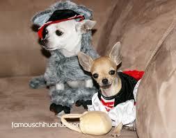 Chihuahua Halloween Costumes Chihuahuas Halloween Costumes 2012 Famous Chihuahua Halloween