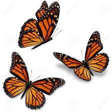 butterfly stock photos royalty free business images