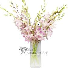 wholesale dendrobium orchids white blush