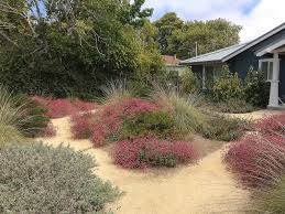 native plants california california lessons for spring planting