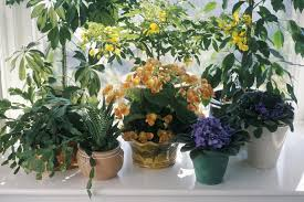 how to purchase and grow organic house plants