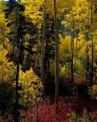 eastern sierras color james sweeney photography