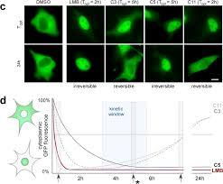 sensors free full text translocation biosensors u2013 cellular
