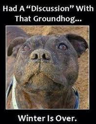 Groundhog Meme - i has a hotdog groundhog day funny dog pictures dog memes