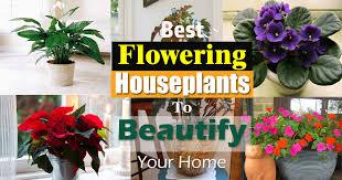 Best Fragrant Indoor Plants - 17 best flowering houseplants balcony garden web