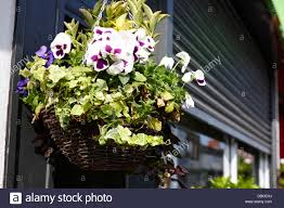 basket of flowers basket of flowers hanging outside a shop in the uk stock photo