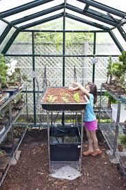 small backyard greenhouses amys office