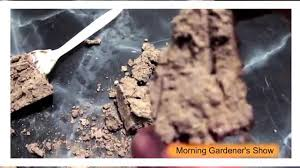 native plants for clay soil truth about your clay soil youtube