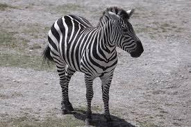 toledo zoo animal photo gallery