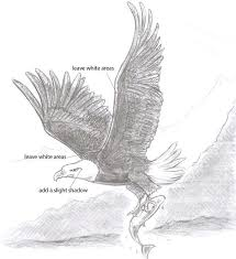 drawn bald eagle shadow pencil and in color drawn bald eagle shadow