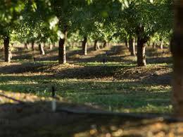 tree vine nelson irrigation