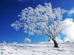 wallpaper desktop winter scenes desktop wallpaper winter desktop background media file