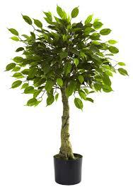 nearly 3 ficus tree uv resistant indoor outdoor