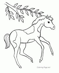 coloring pages horse trailer baby horses coloring pages cute horse page for kids animal with