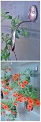 amazing backyard ideas diy tuesday simple and amazing backyard ideas 24